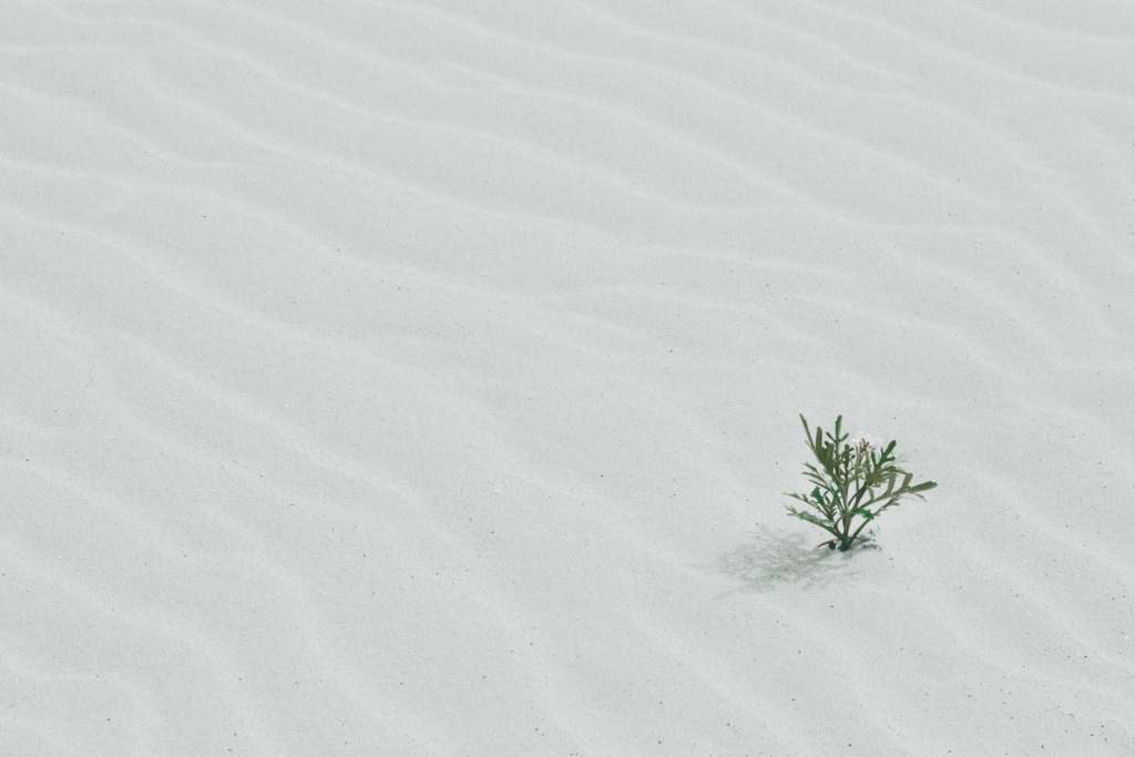 a small plant growing in the desert