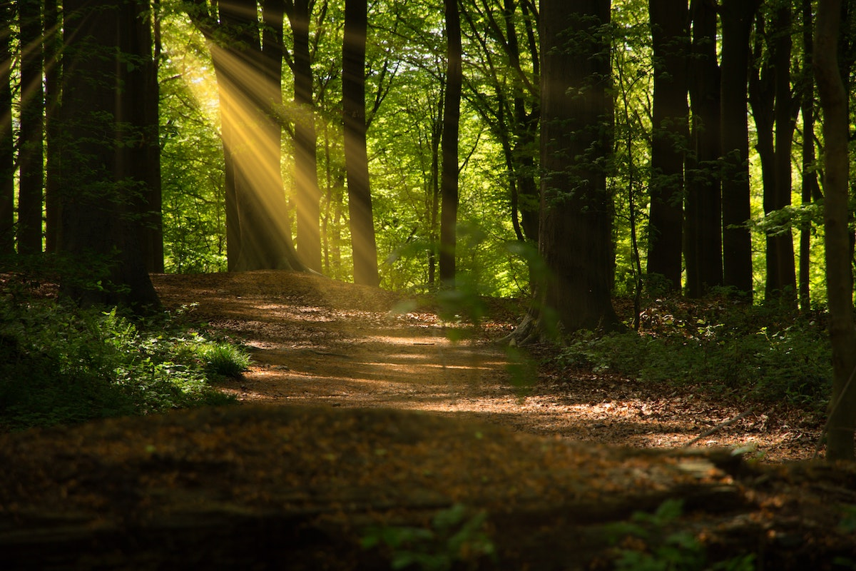 sunlight on a path in the woods